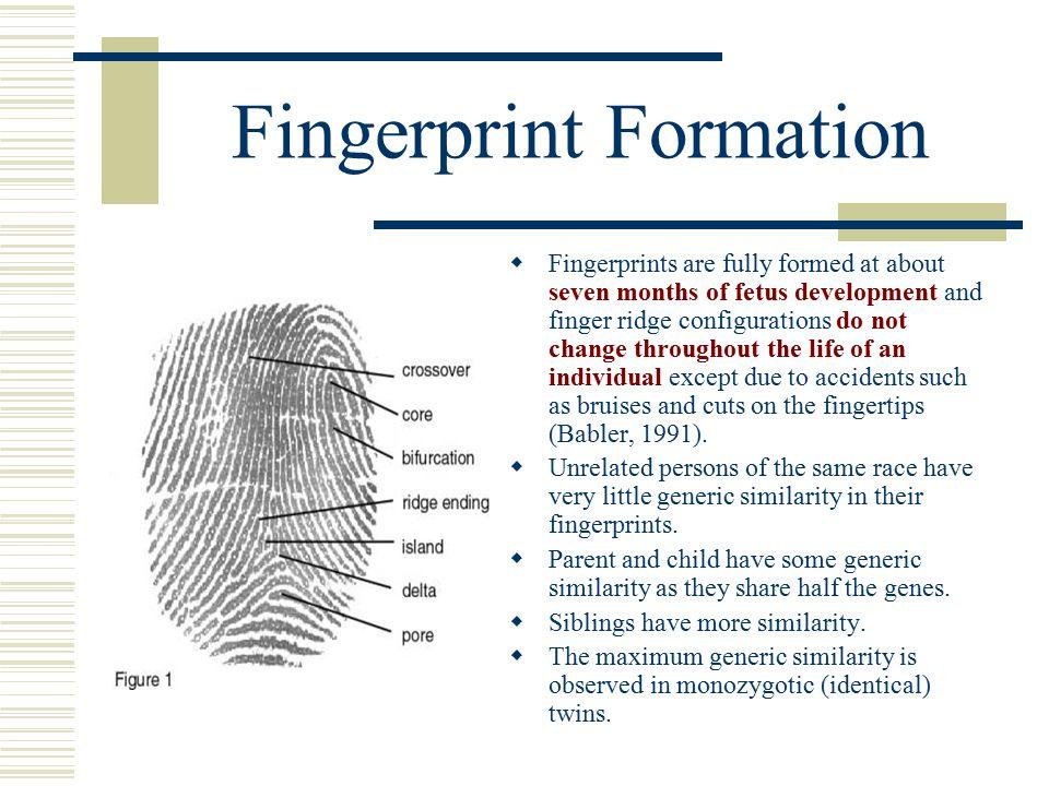 Fingerprint Recognition - ppt download