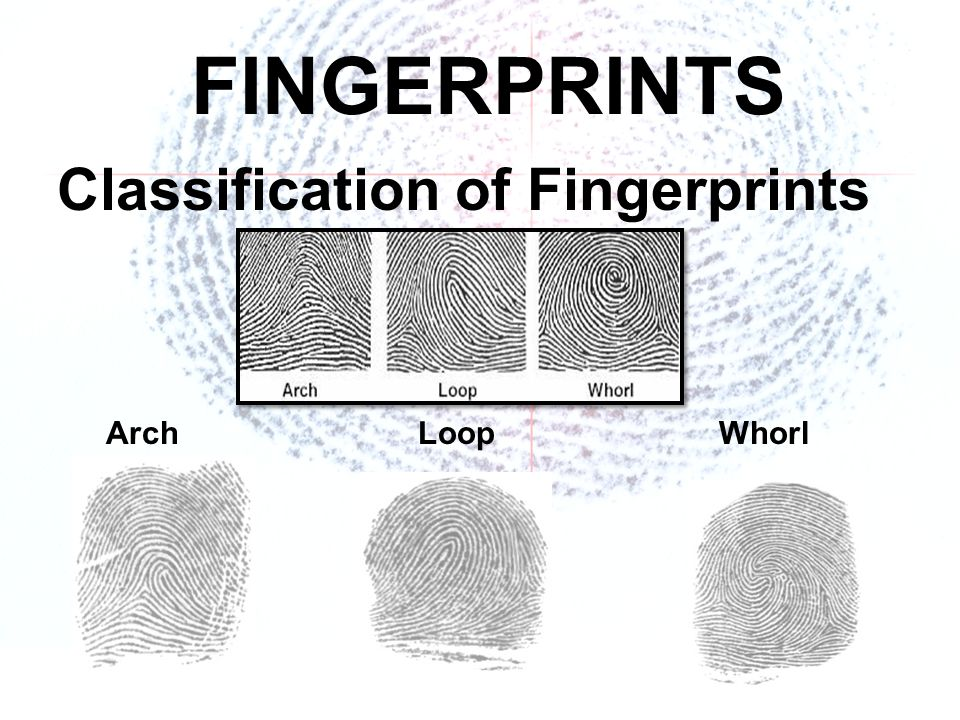 FINGERPRINTS. - ppt download