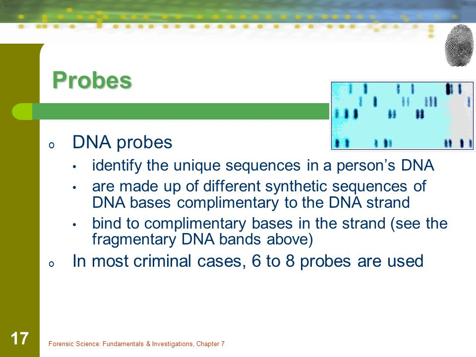 Probes DNA probes In most criminal cases, 6 to 8 probes are used
