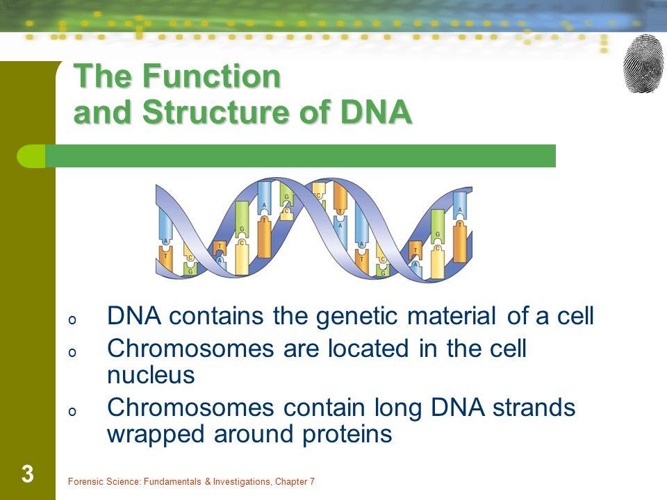 The Function and Structure of DNA