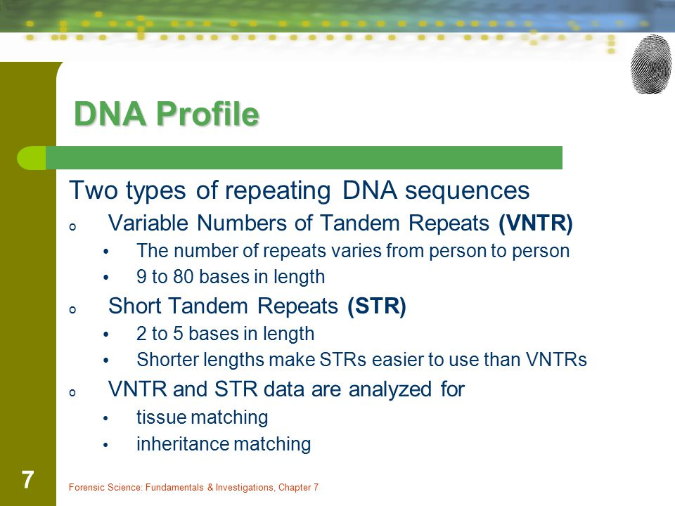 DNA Profile Two types of repeating DNA sequences
