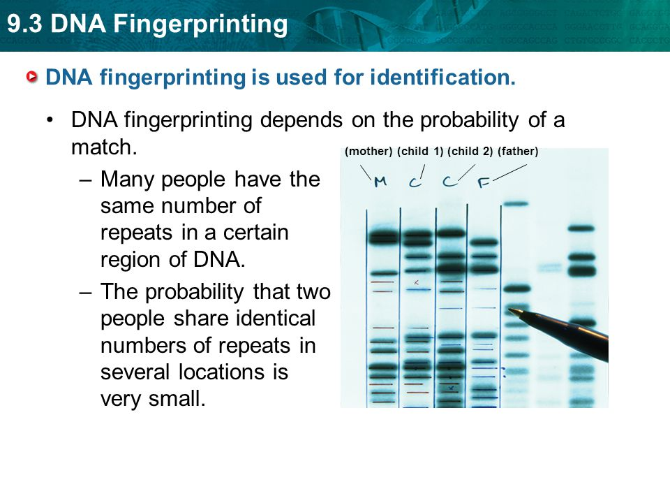 DNA fingerprinting is used for identification.