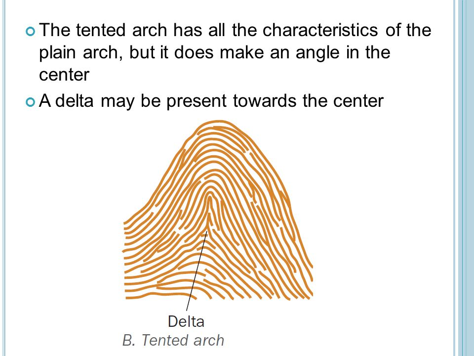 The tented arch has all the characteristics of the plain arch but it does make  sc 1 st  SlidePlayer & Fingerprints. - ppt video online download
