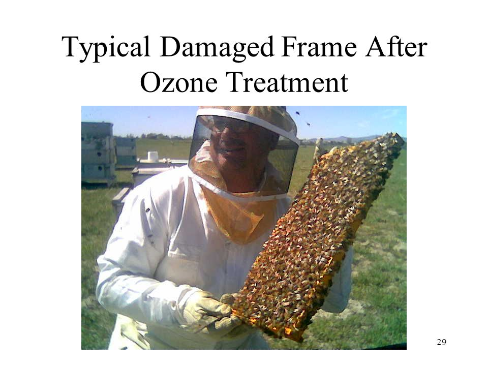 Typical Damaged Frame After Ozone Treatment