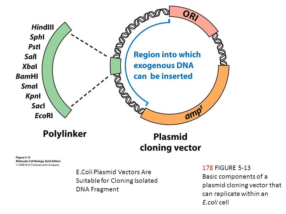 E Coli Diagram Plasmid Molecular Cell Biology...