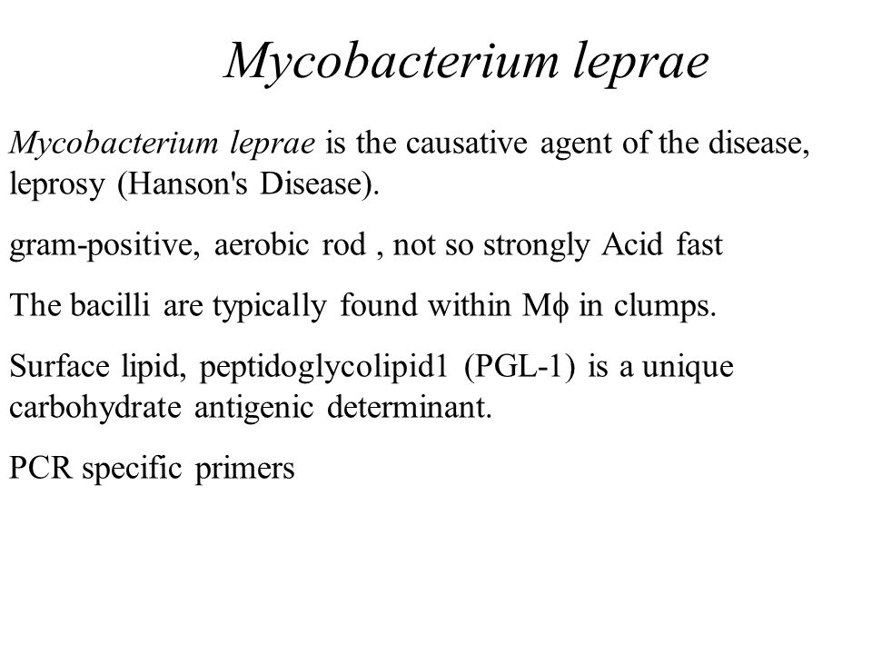 Mycobacterium leprae Mycobacterium leprae is the causative agent of the disease, leprosy (Hanson s Disease).