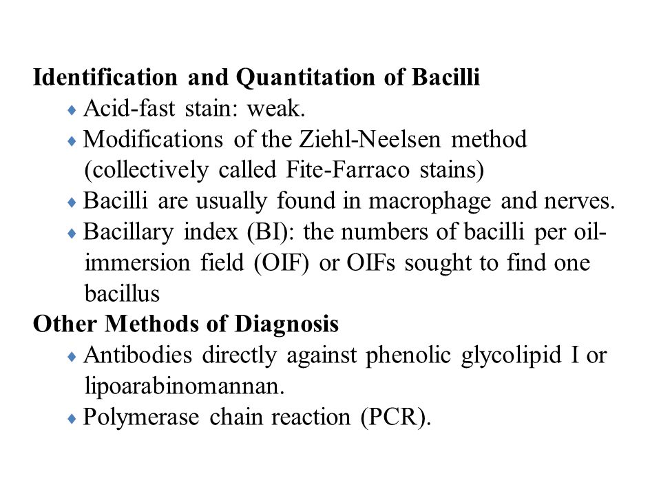 Identification and Quantitation of Bacilli