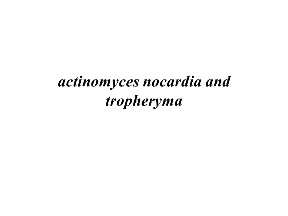 actinomyces nocardia and tropheryma