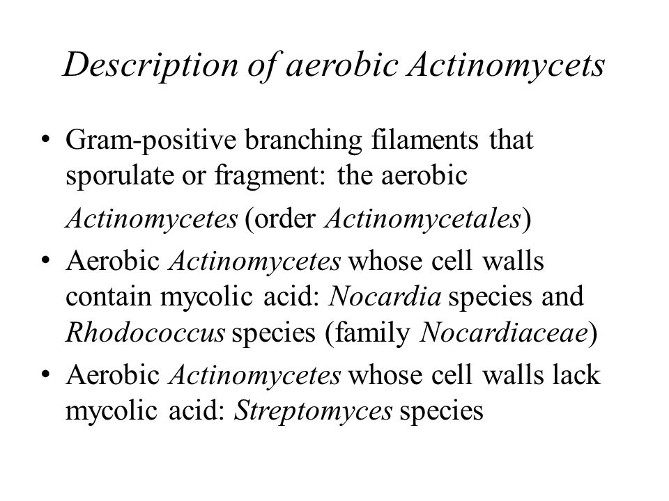 Description of aerobic Actinomycets