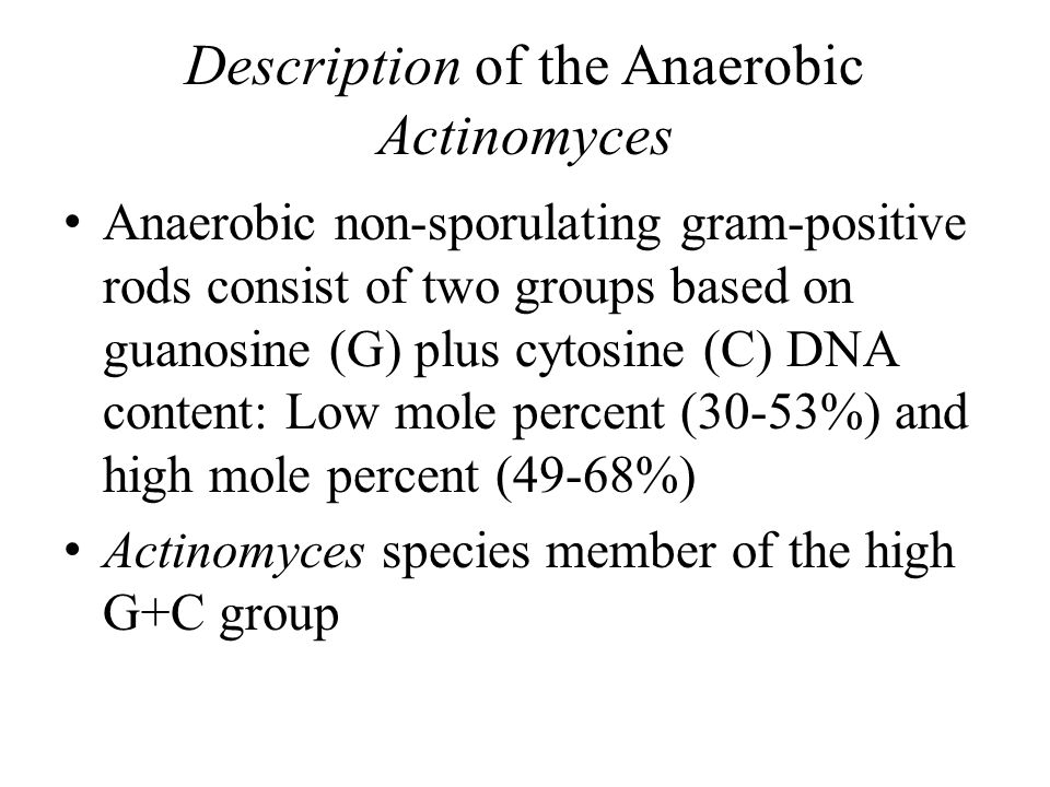 Description of the Anaerobic Actinomyces