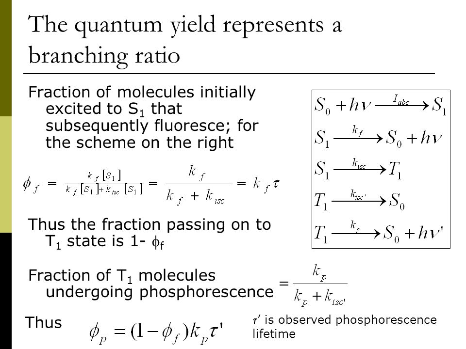 The quantum yield represents a branching ratio