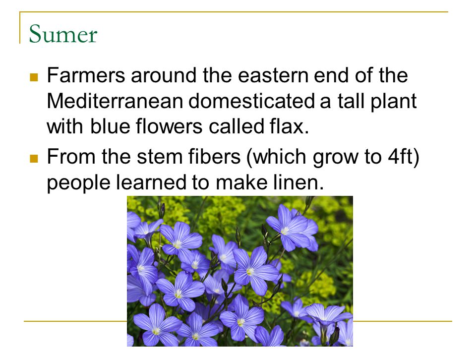 Sumer Farmers around the eastern end of the Mediterranean domesticated a tall plant with blue flowers called flax.