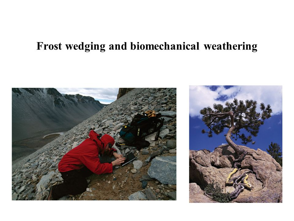 Frost wedging and biomechanical weathering