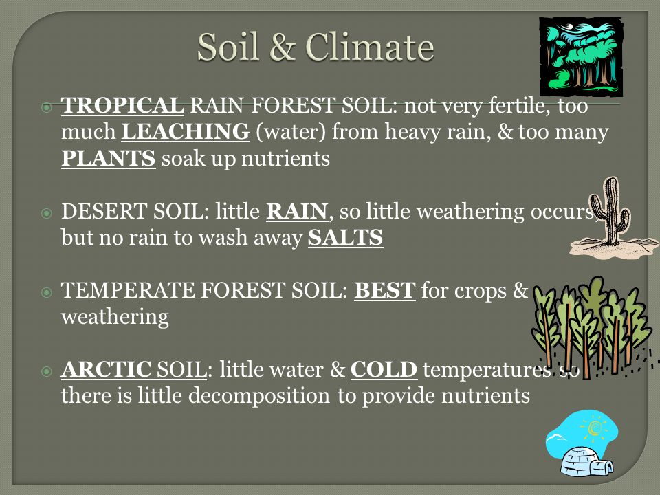 Soil & Climate TROPICAL RAIN FOREST SOIL: not very fertile, too much LEACHING (water) from heavy rain, & too many PLANTS soak up nutrients.