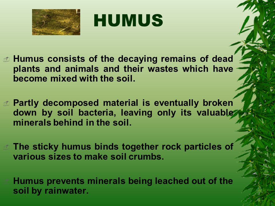 All about soil ppt video online download for Mineral soil definition