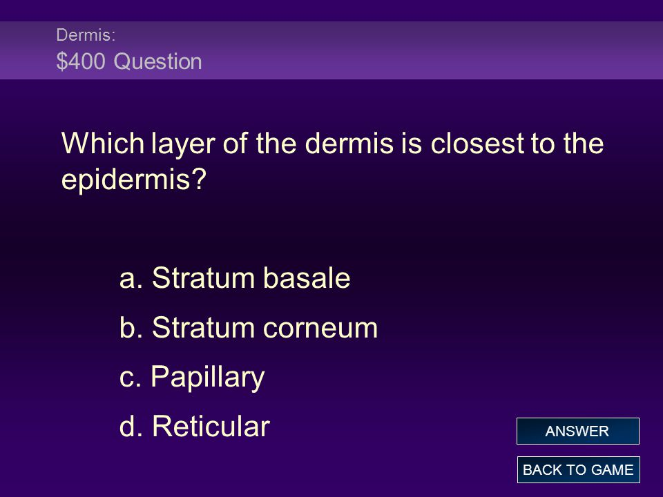 Which layer of the dermis is closest to the epidermis
