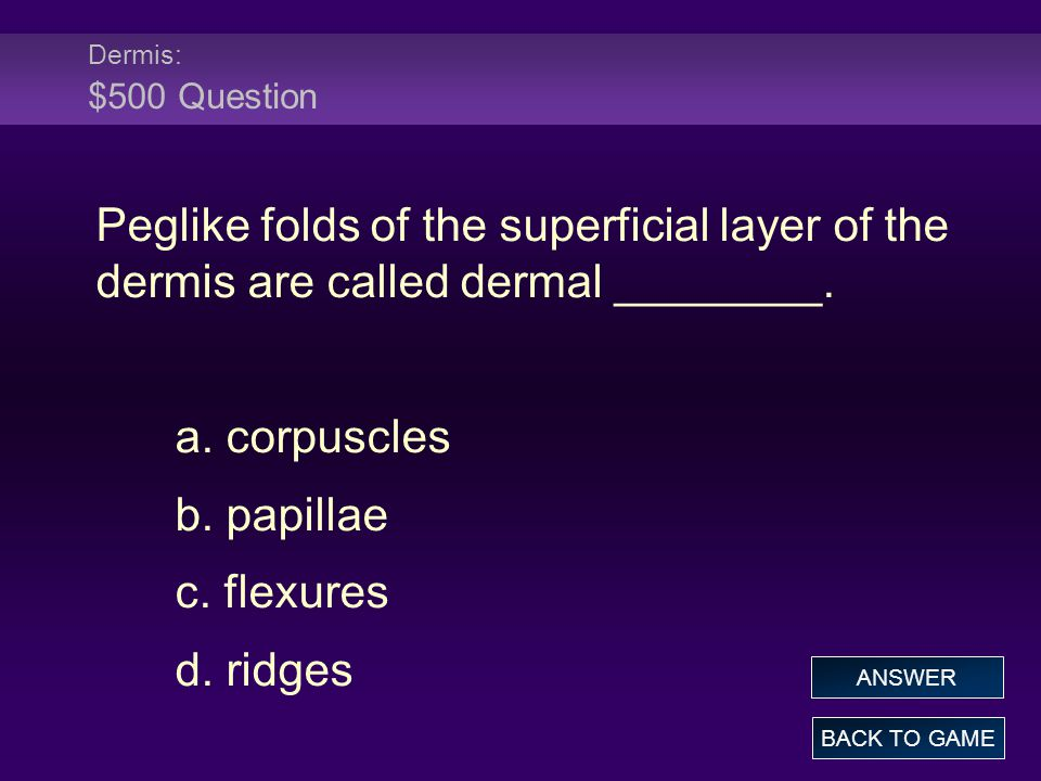 Dermis: $500 Question Peglike folds of the superficial layer of the dermis are called dermal ________.