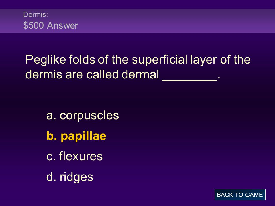 Dermis: $500 Answer Peglike folds of the superficial layer of the dermis are called dermal ________.