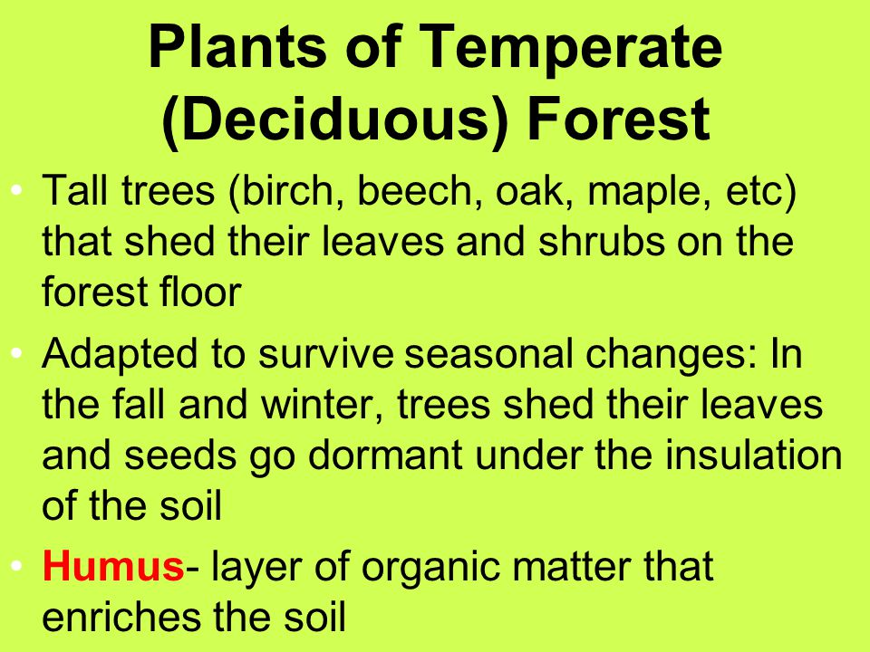 Plants of Temperate (Deciduous) Forest