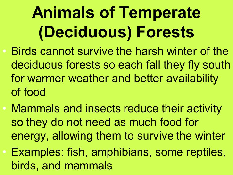 Animals of Temperate (Deciduous) Forests