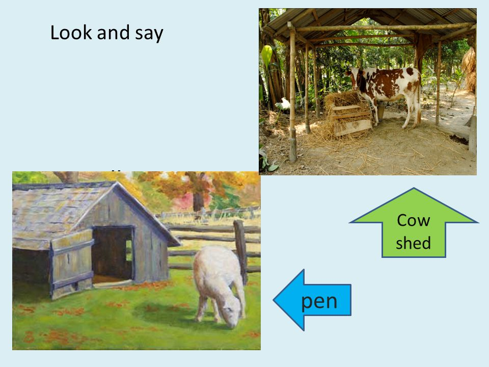 C ll Look and say Cow shed pen