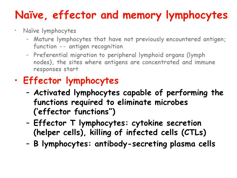 Naïve, effector and memory lymphocytes
