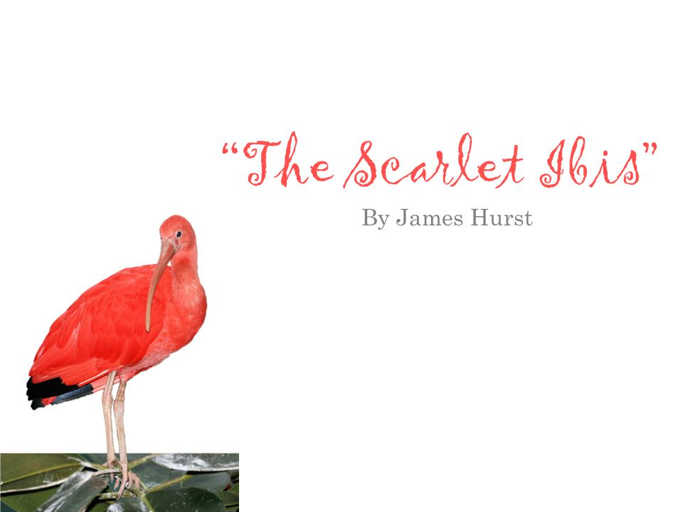 the use of indirect characterization in the scarlet ibis a short story by james hurst