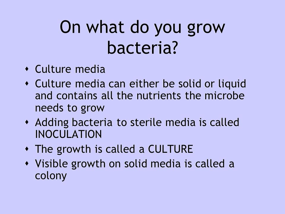 On what do you grow bacteria