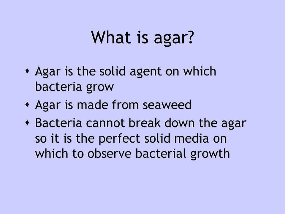 What is agar Agar is the solid agent on which bacteria grow