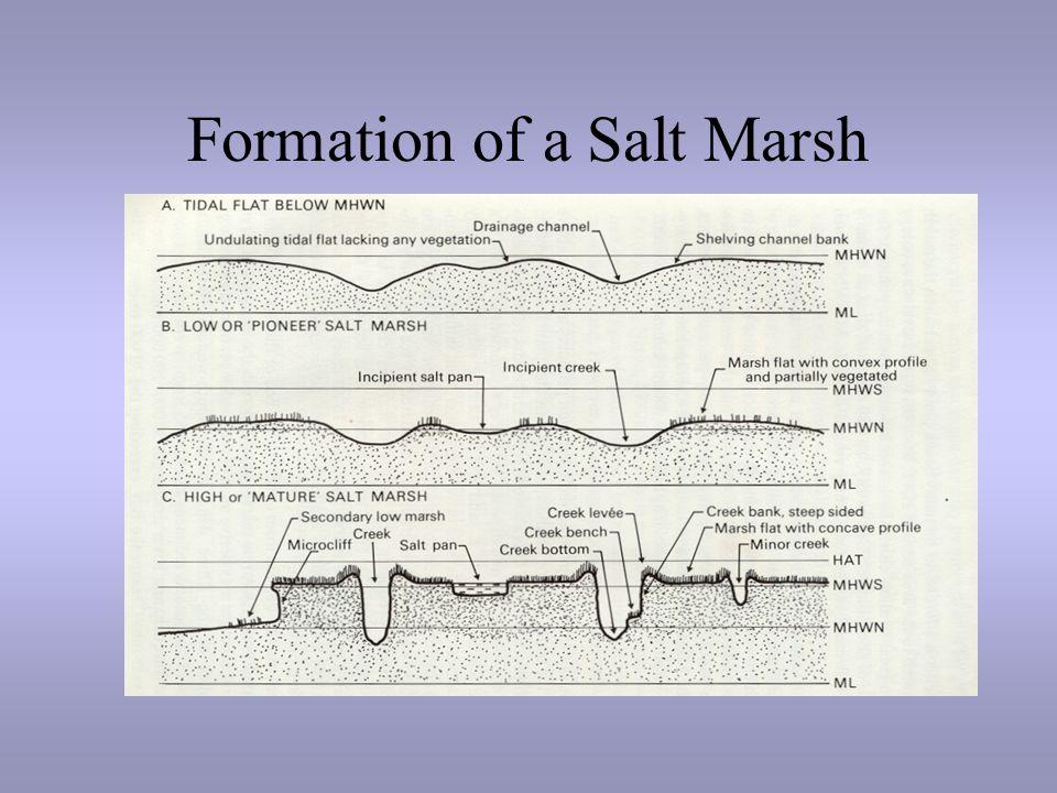 tidal marshes physical factors. - ppt video online download salt marsh diagram western 1000 salt spreader wiring diagram