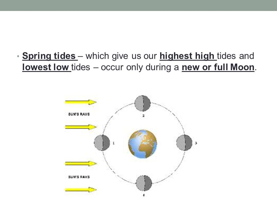 Spring tides – which give us our highest high tides and lowest low tides – occur only during a new or full Moon.