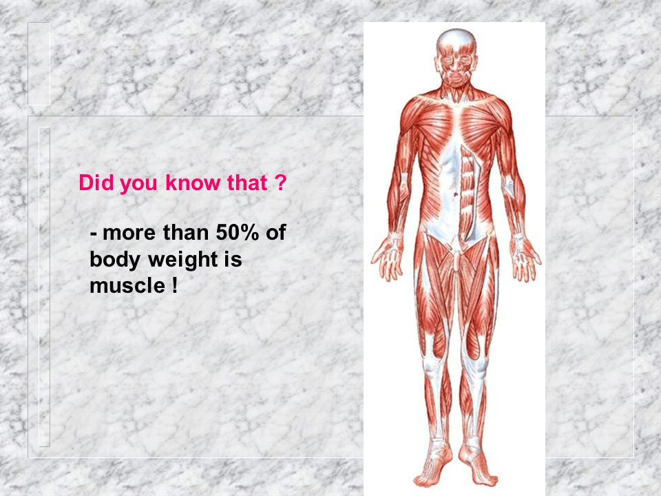Anatomy & Physiology I Unit 8: Muscular System Review - ppt download