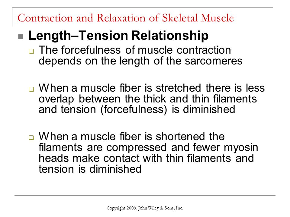 length tension relationship muscle contraction and relaxation