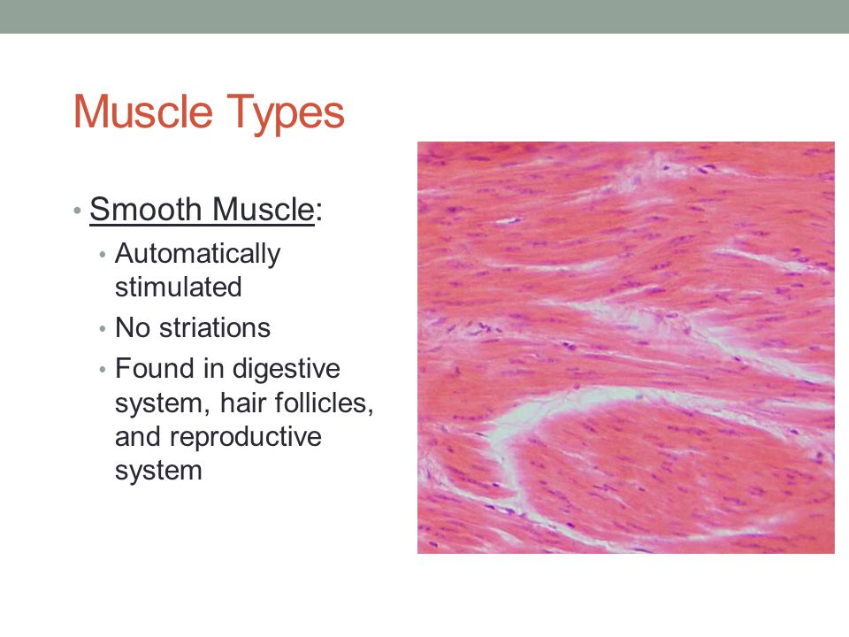Smooth Muscle Examples - examples.yourdictionary.com