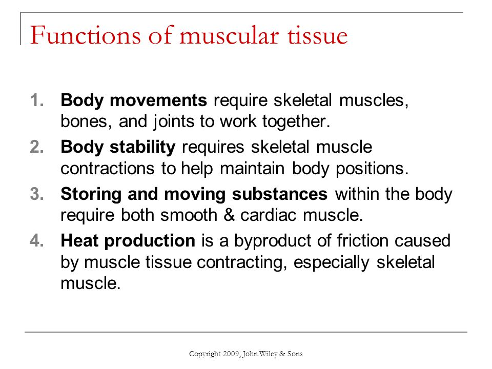 What Is The Function Of Muscle Tissue Research Paper Writing Service