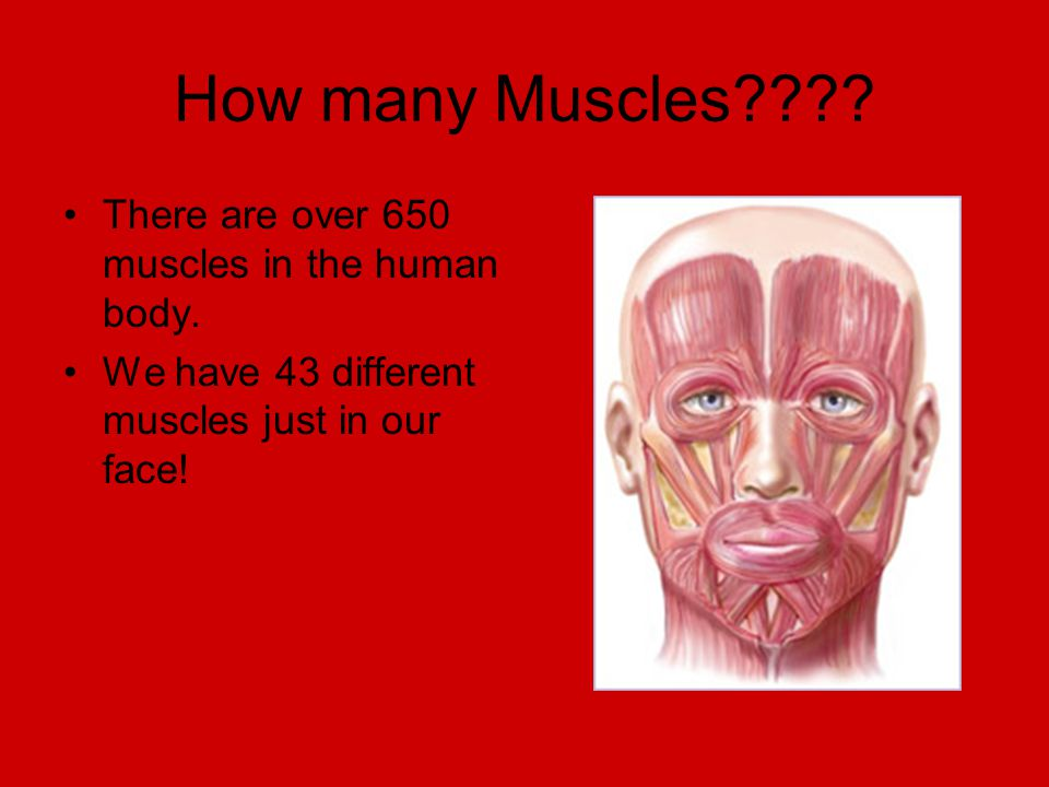The Human Muscular System Ppt Video Online Download