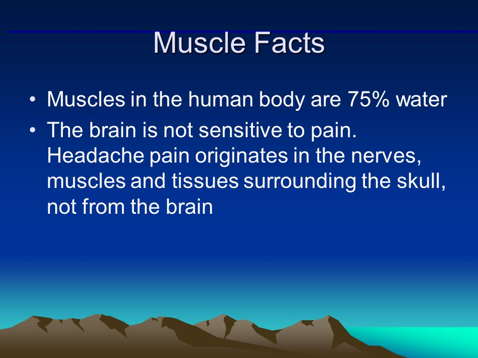 muscle mechanics: importance of fascicle arrangement - ppt download, Muscles