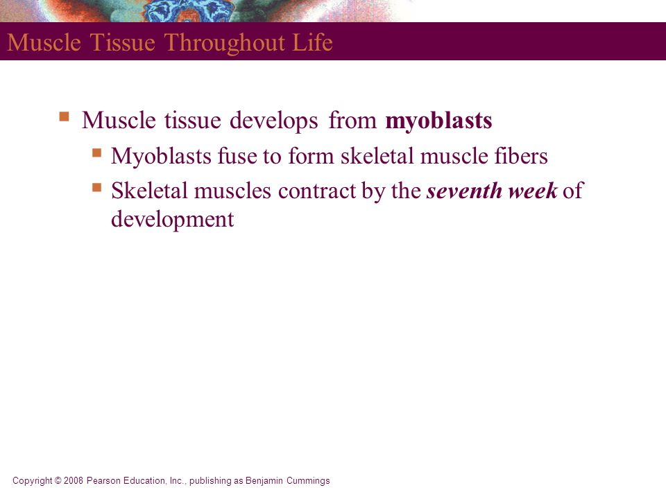 PART 1 Muscle Tissue. - ppt video online download