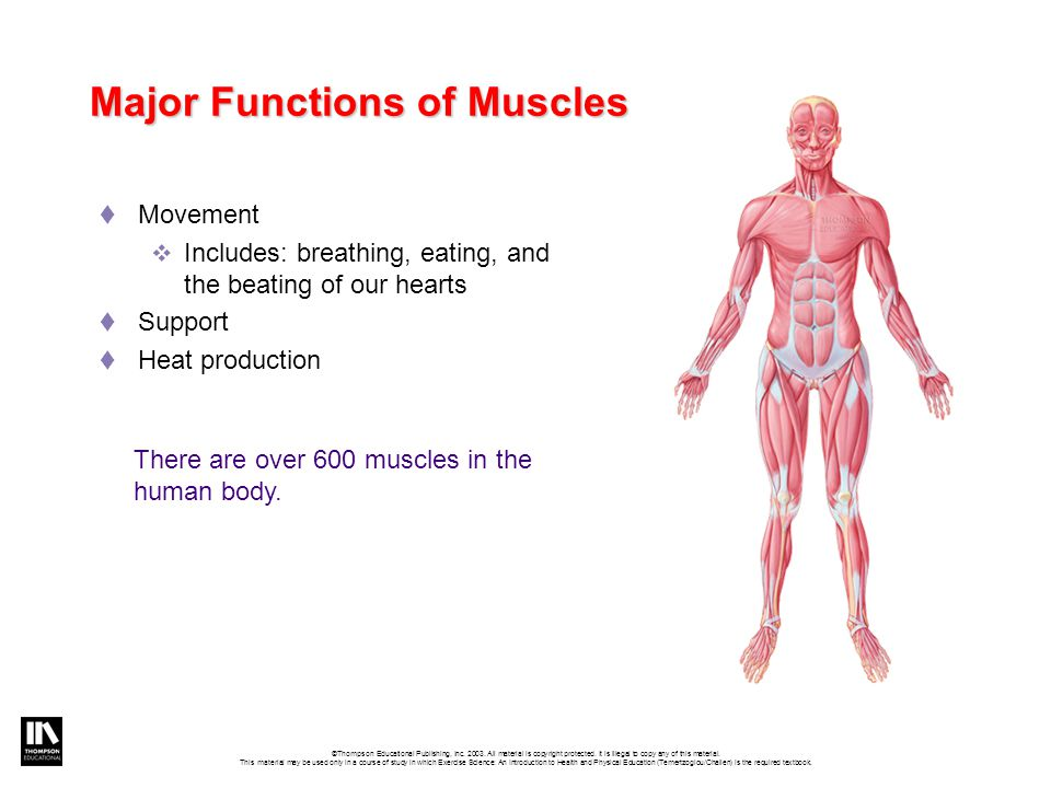 List the major bones of the body and at least one muscle…