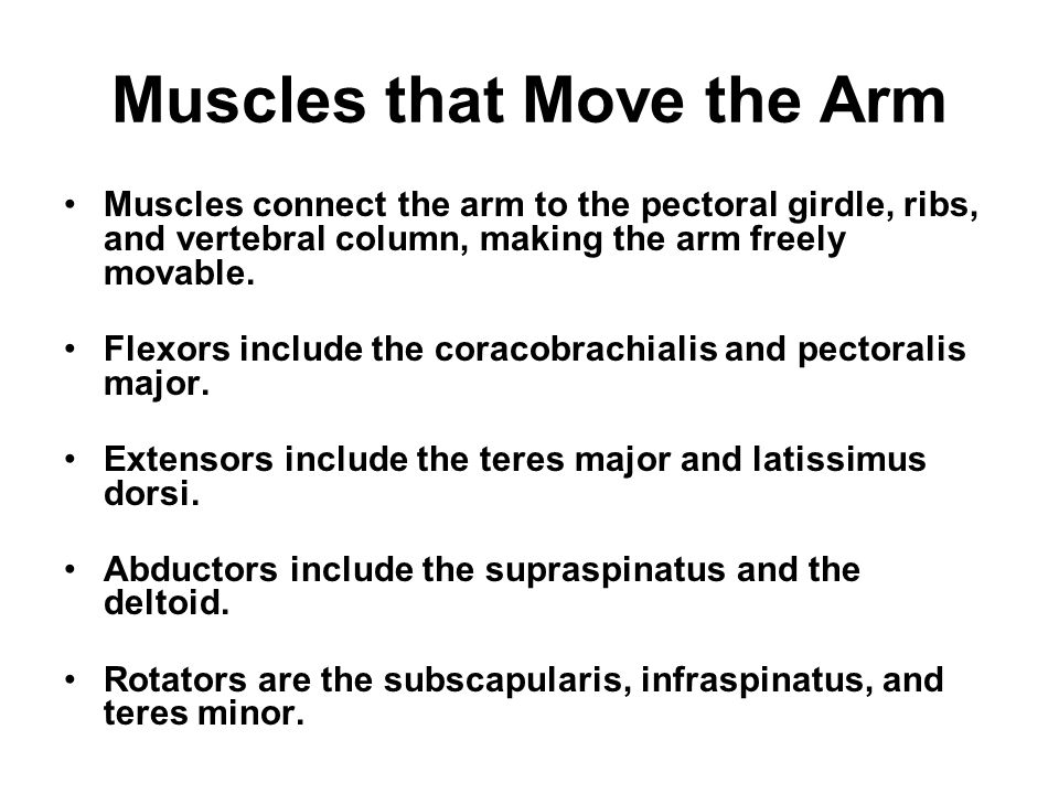 MUSCULAR SYSTEM Chapter ppt video online download