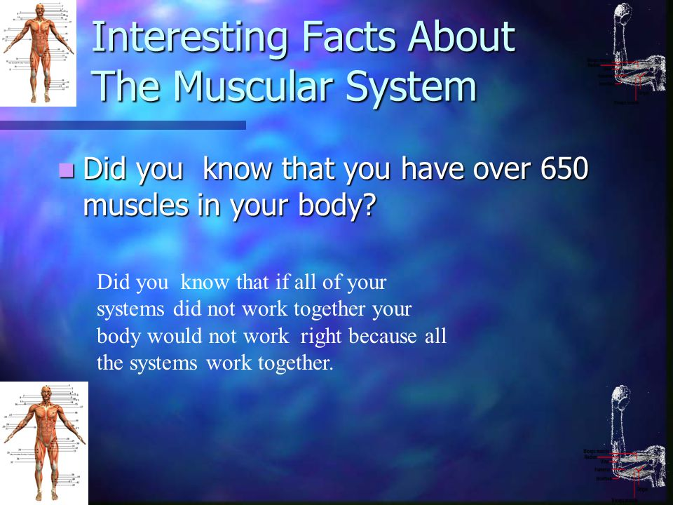 muscular system interesting facts – citybeauty, Muscles