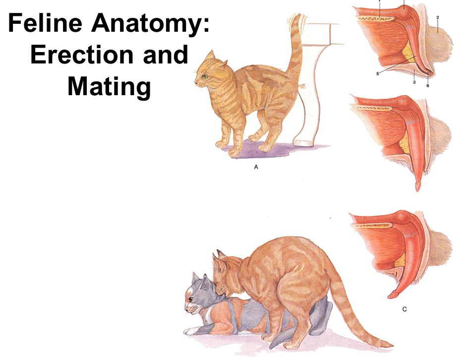 Why Does a Male Cat Bite a Females Neck While Mating 2459257 ...
