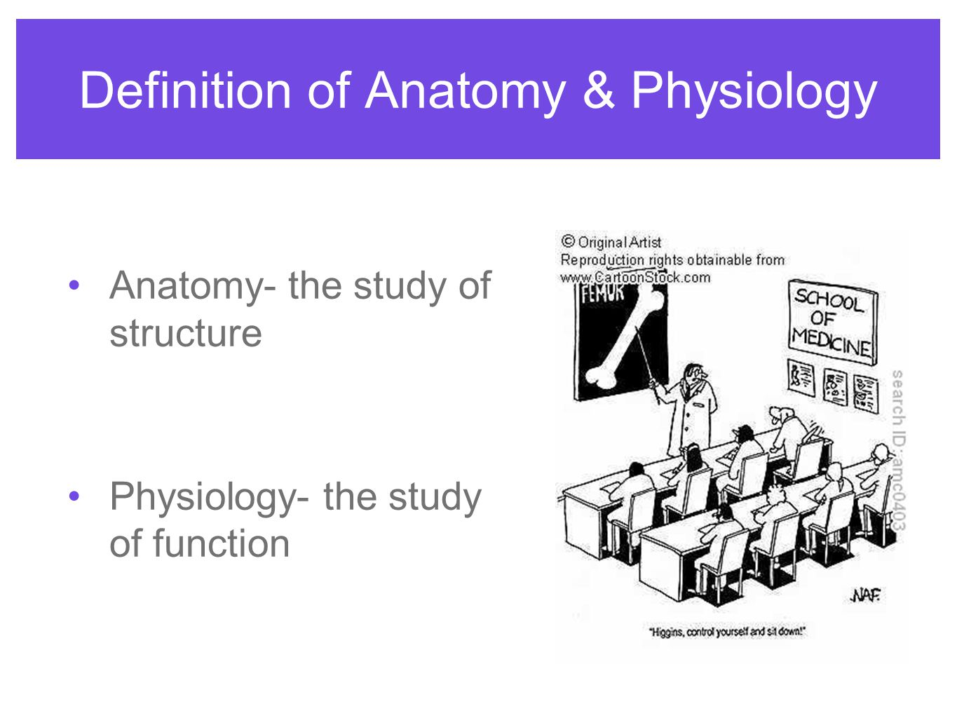an analysis of muscle function and anatomy in sports Anatomy of the human body muscular system ☑ specific analysis and functions  of all muscles & muscle groups ☑ animations, pictures, and diagrams teaching.
