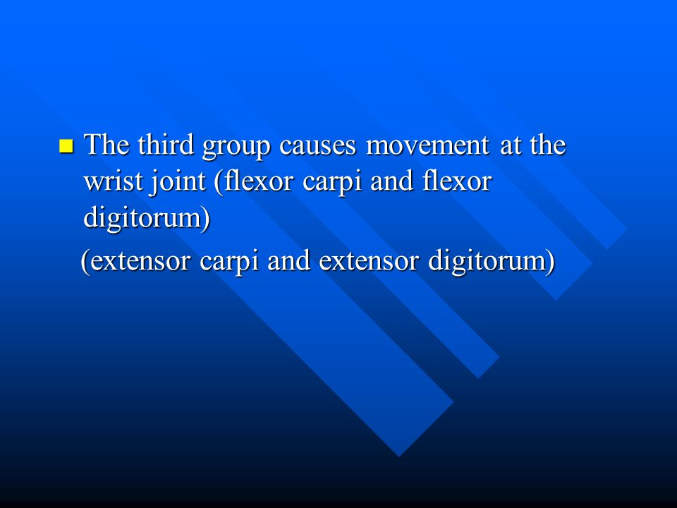 The third group causes movement at the wrist joint (flexor carpi and flexor digitorum)