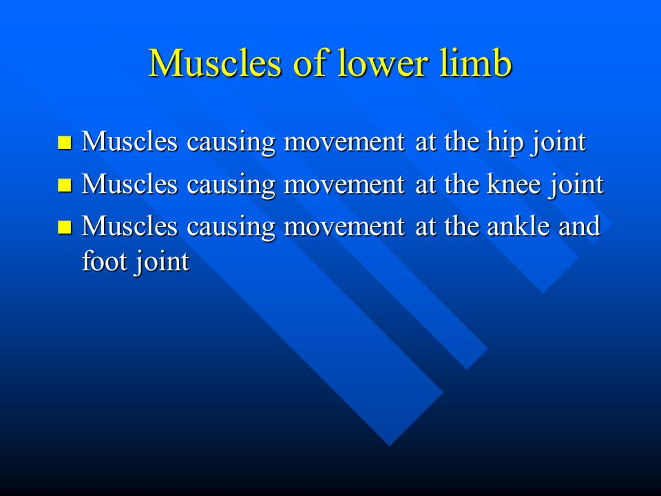 Muscles of lower limb Muscles causing movement at the hip joint