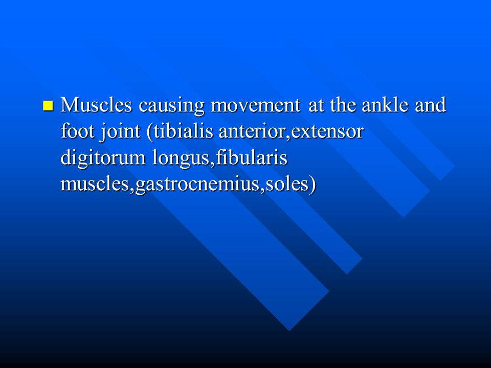 Muscles causing movement at the ankle and foot joint (tibialis anterior,extensor digitorum longus,fibularis muscles,gastrocnemius,soles)