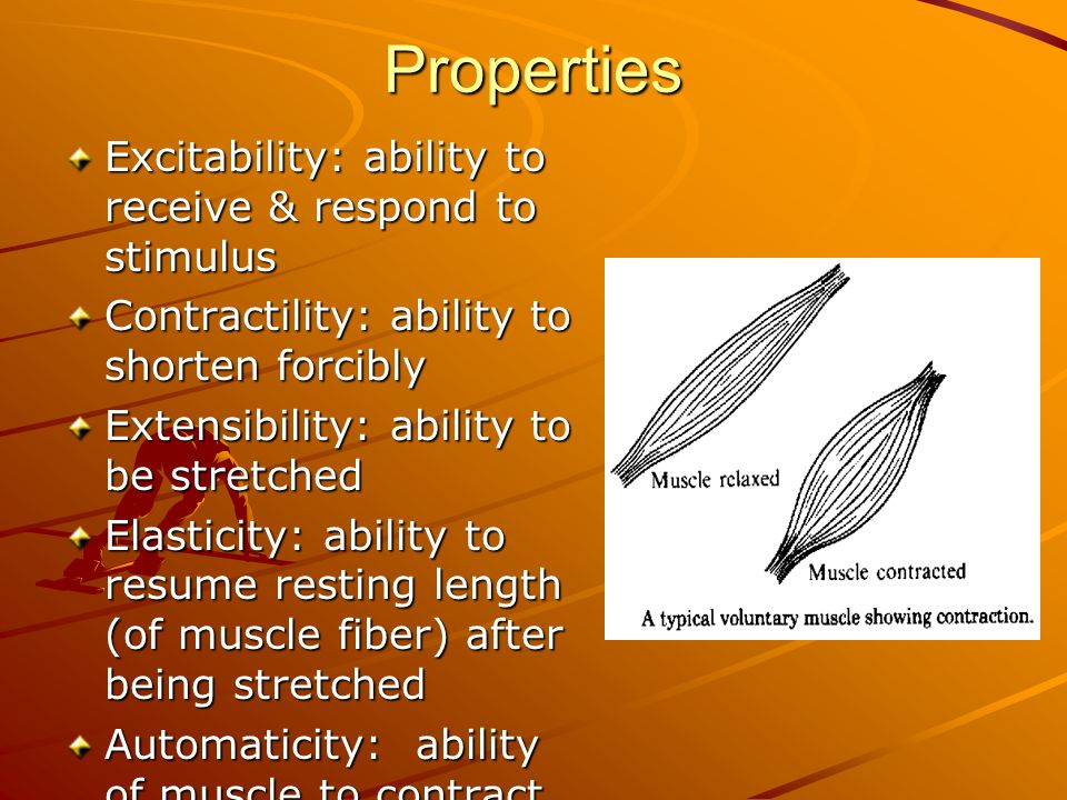 muscular system why do people lift weights  why do we