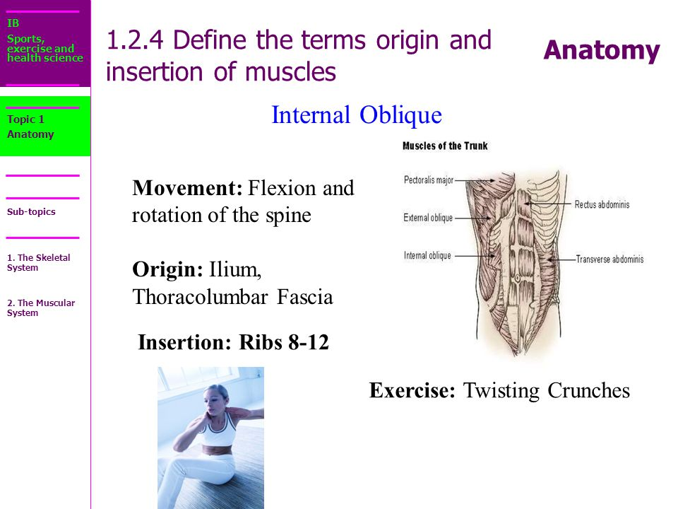 Perfect Definition Of Origin In Anatomy Ideas - Human Anatomy Images ...