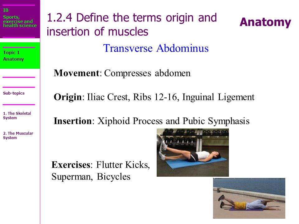 Sport Science Muscle Origin And Insertion College Paper Academic