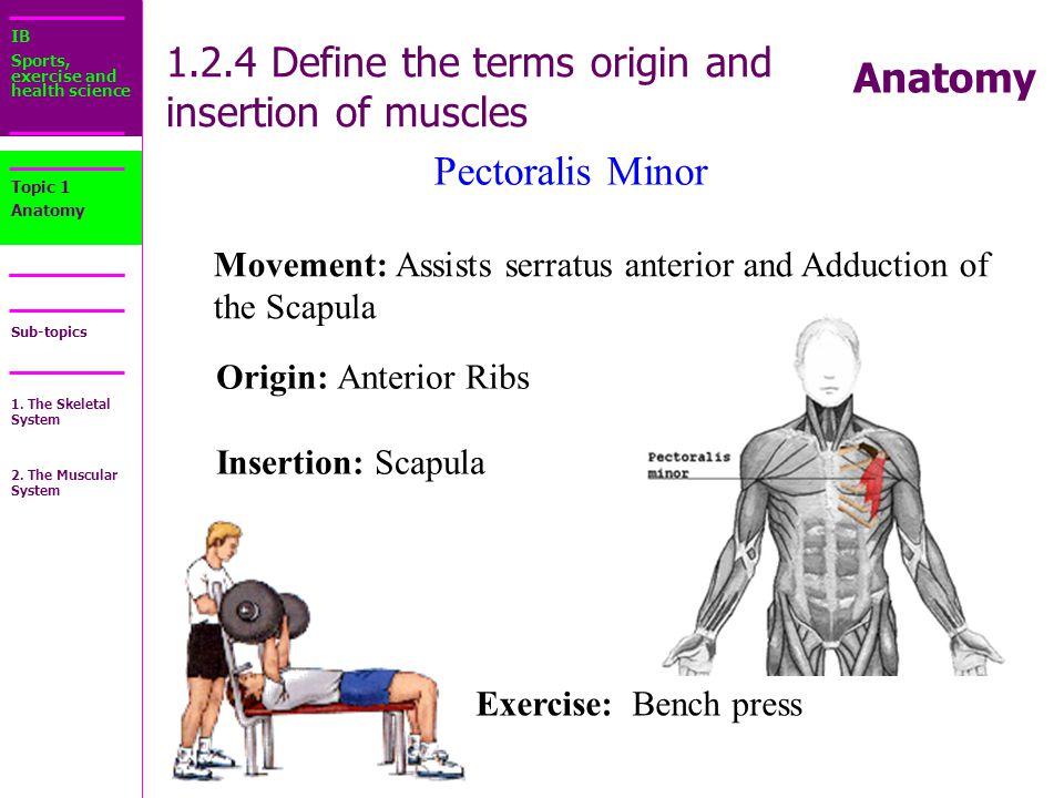 Origin Definition Anatomy Ct Pulmonary Angiography Eydt